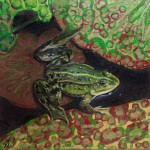 Rana temporaria (Common Frog) by Alanda Calmus AC4