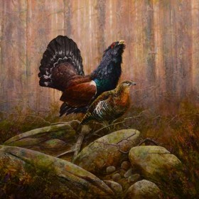 Capercaillie by Chris Sharp